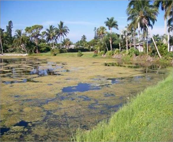 WETPLAN Bad Pond